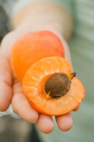 apricotseed.jpg