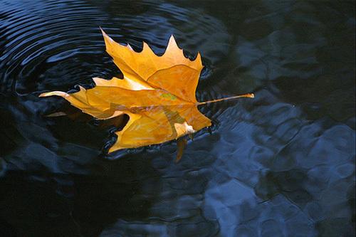 http://www.drtihanyi.hu/uploads/autumn5.jpg