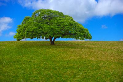 http://www.drtihanyi.hu/uploads/tree.jpg